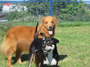 Billie And Dash